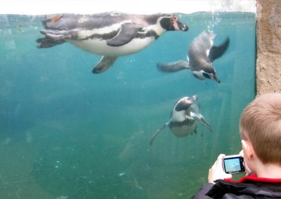 Watching the penguins swimming